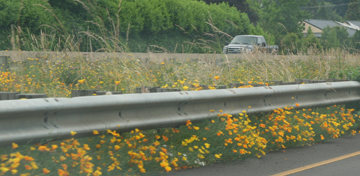 highway_flowers