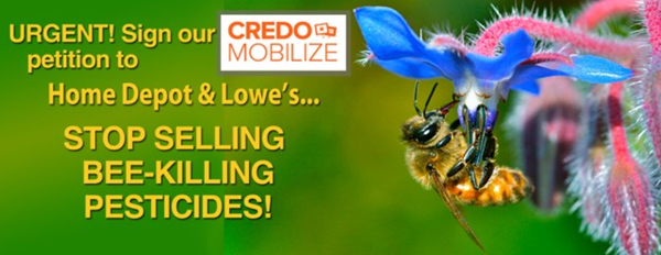 Home Depot and Lowes online petition to save bees!_CREDO_PetitionGraphic-WEB
