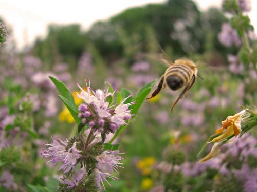 """Bee seeing you!"" by Marie Sweeten"