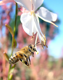Get involved today to help save the honey bee from dangerous pesticides! (Photo by Roka Walsh)