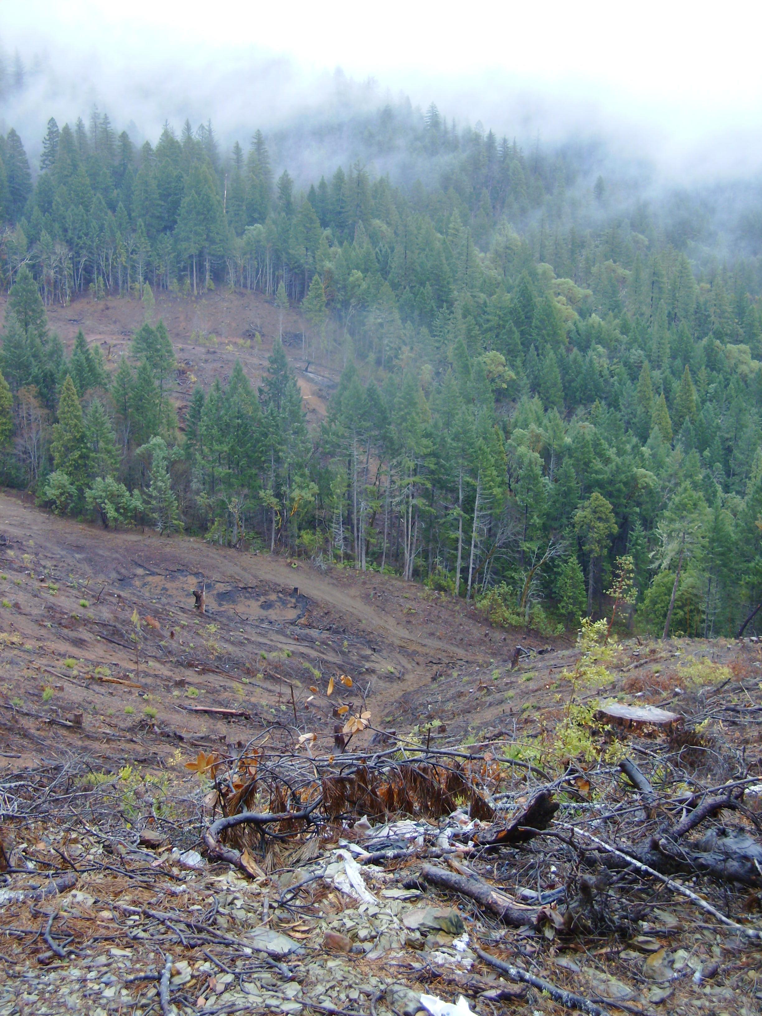 Pesticides were sprayed on this steep clear cut.