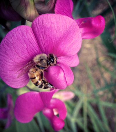Bee and Sweet Pea, Photo by Katie Montgomery