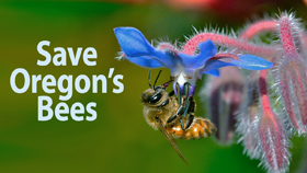 Save Oregon's Bees, a project of Beyond Toxics