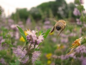 """Bee Seeing You"" by Marie Sweeten"