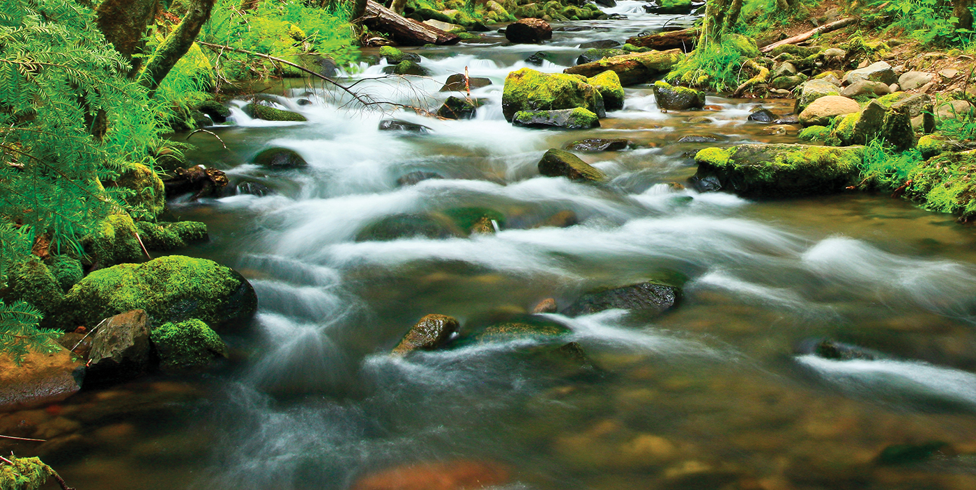 Protecting-Watersheds-Oregons-State-ForestsBanner_WaterOnly_MG_2725_1400px