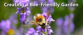 Bees in Danger