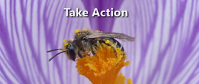 Take Action to help Save Oregon's Bees!