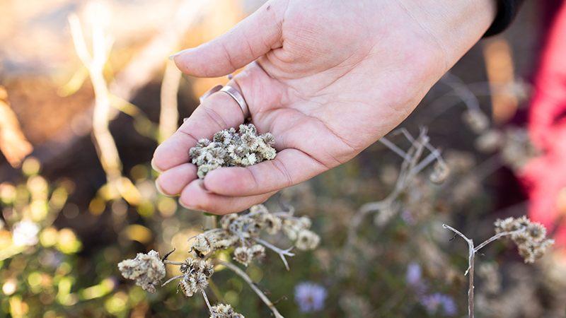 PollinatorGarden_CU_Hand_w_Seeds_HORIZ-BEST_800x600