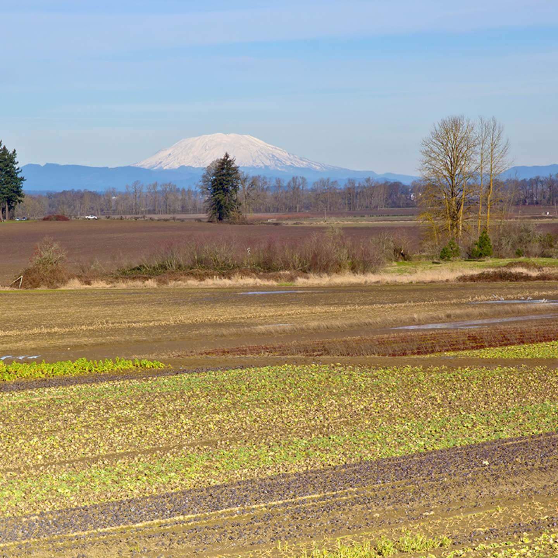 Mt. St. Helens and farm fields Oregon.