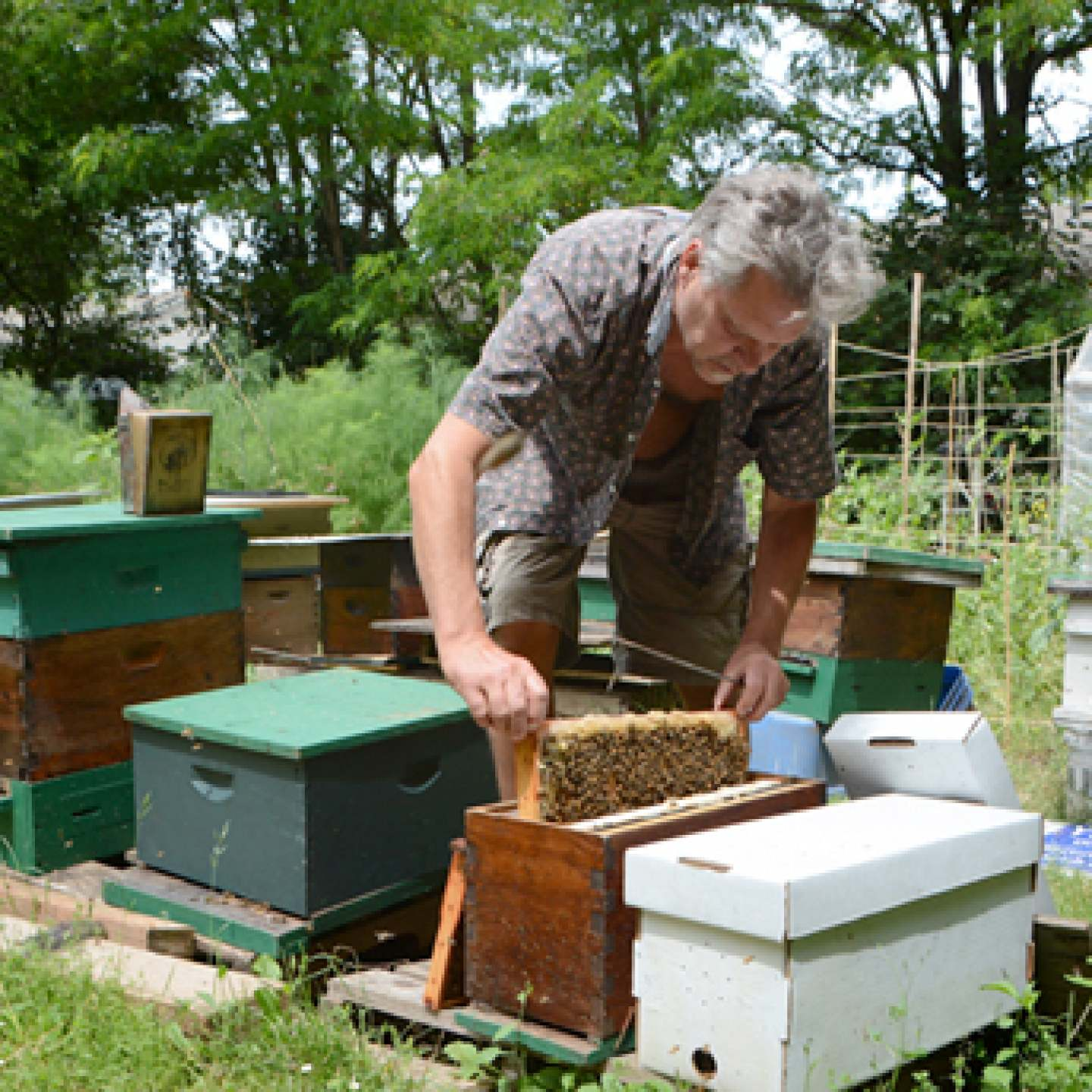 Philip Smith with his hives - summer, 2013