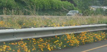 highway_flowers