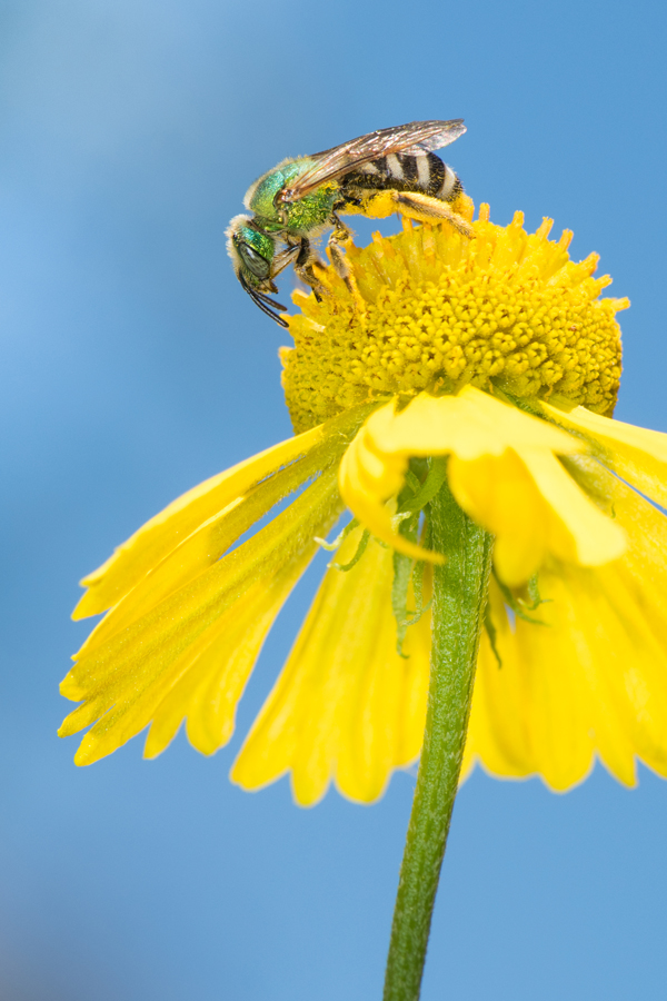 2016 Beauty Of The Bee Photo Contest Winners | Beyond Toxics: www.beyondtoxics.org/events/2016-beauty-bee-photo-contest-winners