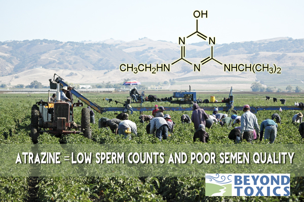 Studies show a link between atrazine and low sperm count