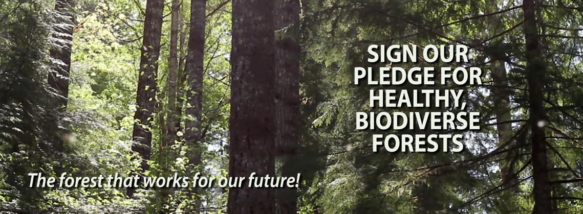BT_HomePage_BiodiverseForestPledge
