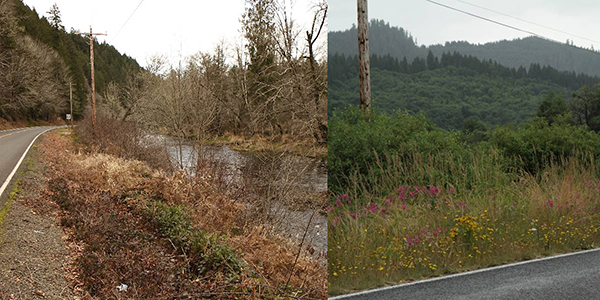 Example of broadcast herbicide spray along roads (left). In sharp contrast (right), roads can be pollinator pathways.