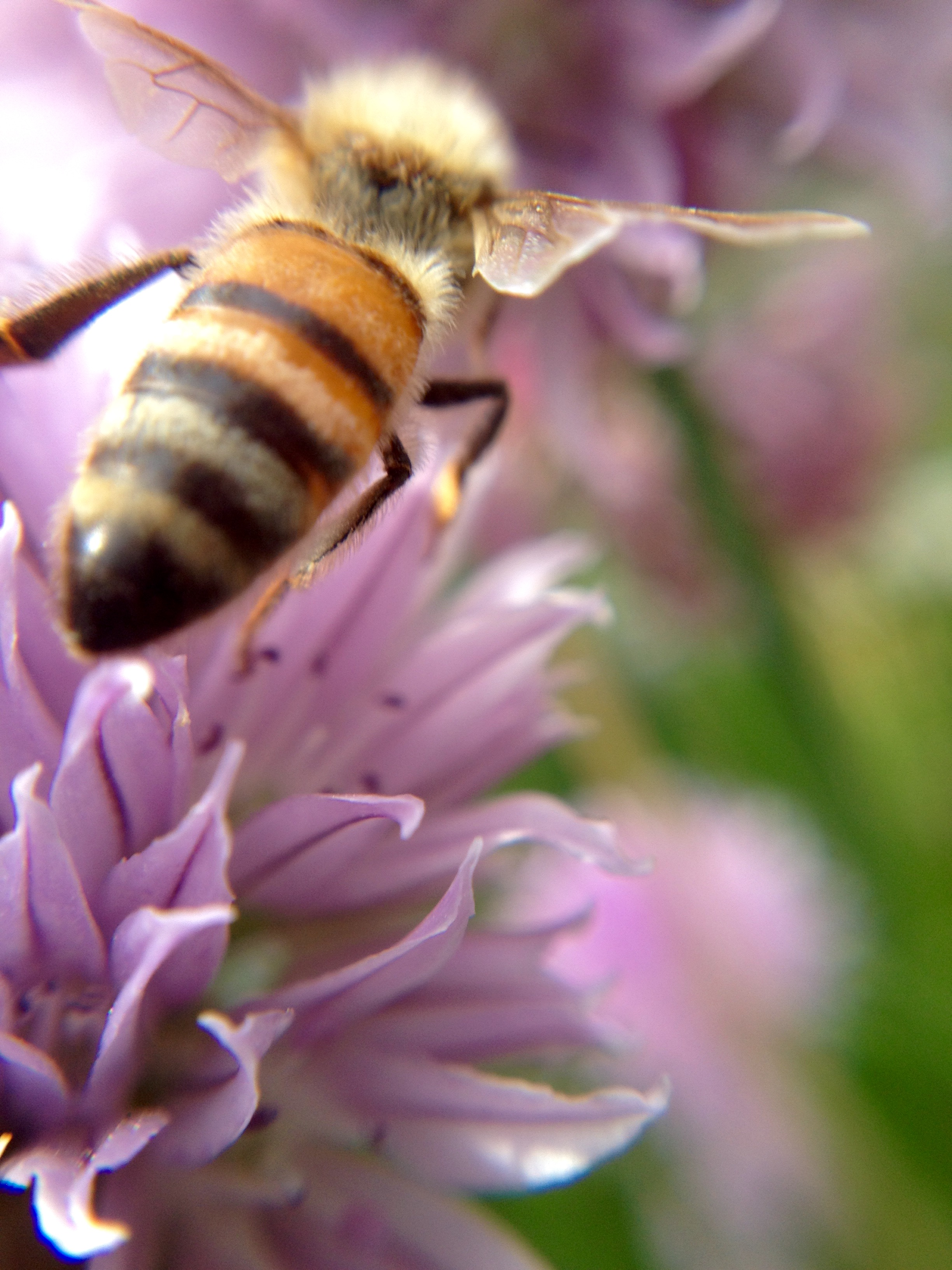 2015 Beauty of the Bee Director's Choice Winner